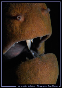 the tooth of a moray eel... ;O)...